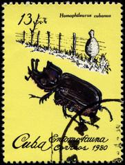 CUBA - CIRCA 1980 Rhino Beetle