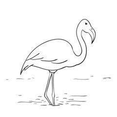 Caroon vector flamingo in lake