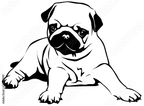 """""""pug puppy"""" stock image and royaltyfree vector files on"""