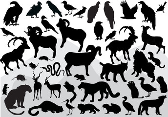 mountain animals collection isolated on white