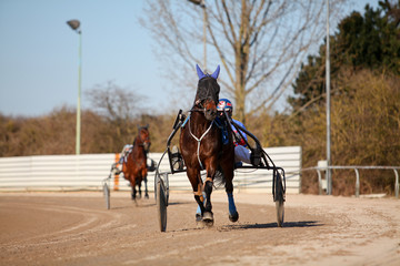 horse racing harness trotting