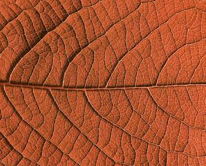 Fototapete - Herbst blatt