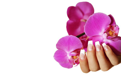 Wall Mural - Hand mit Orchidee