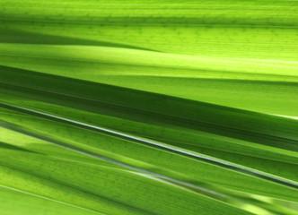 Fototapete - Blatt grün