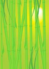 Beautiful vector illustration depicting bamboo