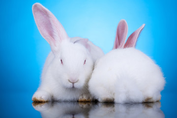 two white rabbits in funny position
