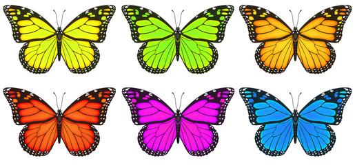 Monarchfalter, Schmetterling, Monarch, Falter
