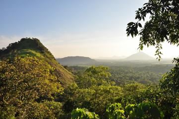 Tropical Jungle - Sri Lanka