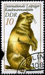 GDR - CIRCA 1982 Marmot