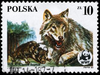 POLAND - CIRCA 1985 Wolves