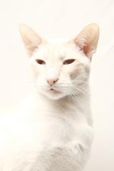 High Key Cat Image