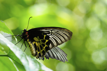butterfly on the leaf of tree