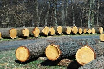 Nutzholz Holzernte