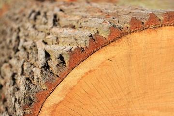 Holz Baum Ausschnit mit Baumrinde
