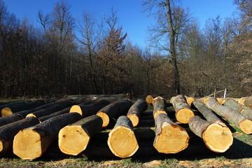 gefällte Bäume im Wald gelagert