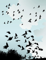 The silhouette of wild birds in the sky.