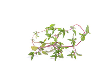 thyme herbs isolated over white