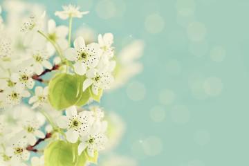 Fototapeta Spring Blossoms