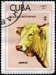 CUBA - CIRCA 1973 Charolaise