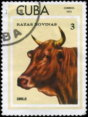 CUBA - CIRCA 1973 Criollo