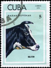 CUBA - CIRCA 1973 Holstein