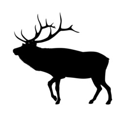 Vector black elk