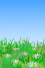 Bright summer background with chamomiles in grass