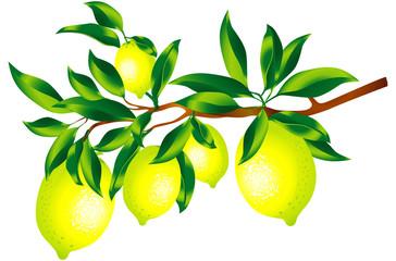 Sprig of lemons