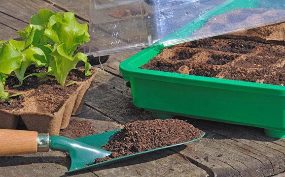 semis dans mini serre
