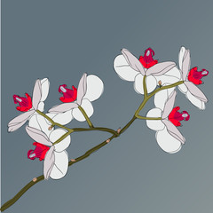 twig blossoming orchids on a background
