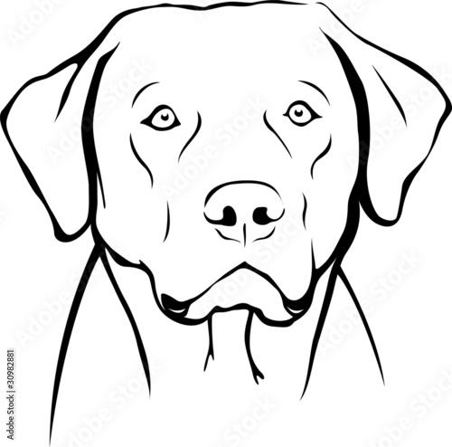 """Labrador Retriever Portrait"" Stockfotos und lizenzfreie ..."