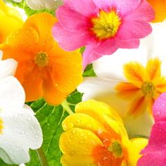 Wall Mural - Blüten