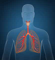 Respiratory system. On blue background.