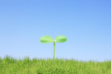 芝生と双葉