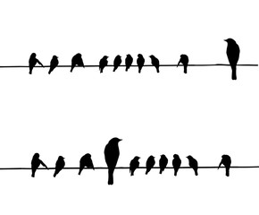 silhouettes of the birds on wire