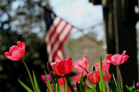 Tulips Saluting The Flag