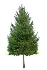 holiday sapling