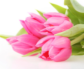 Bouquet of pink tulips isolated on a white background