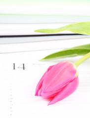 pink tulip lies on an open writing-book