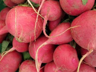 Papier Peint - fresh radish