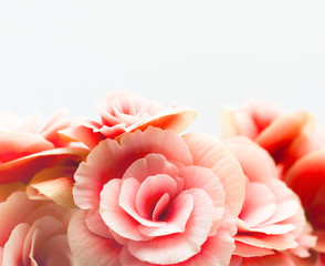 Wall Mural - Floral Background