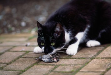 Cat Sniffing A Dead Bird