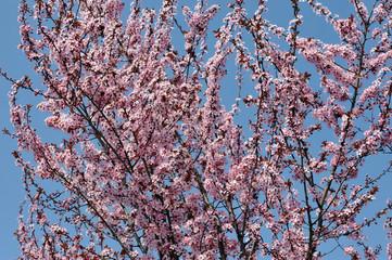 fiori 1261