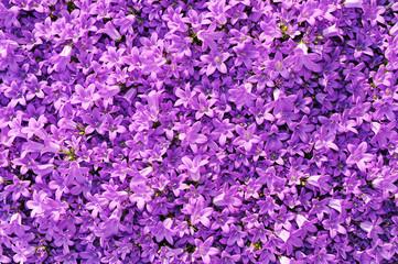 fiori 1217