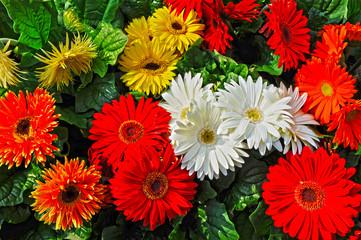 fiori 1229
