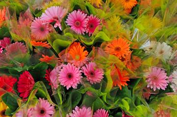 fiori 1253