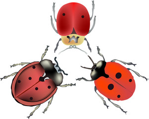 three red bugs illustration