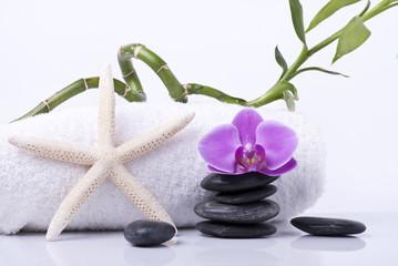stella marina con orchidea e bambù 2