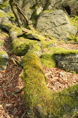 Moss covered fallen tree trunk