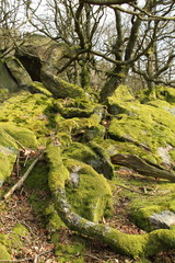Moss covered fallen tree and rocks